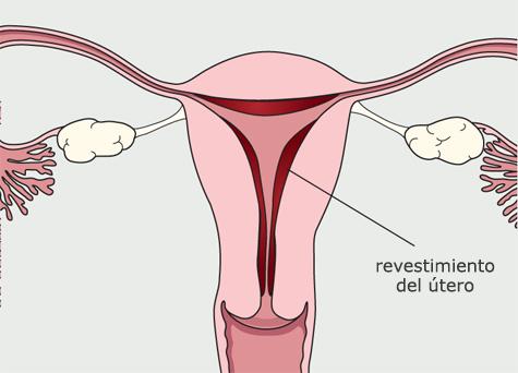 Diagrama del sistema reproductivo de la mujer.