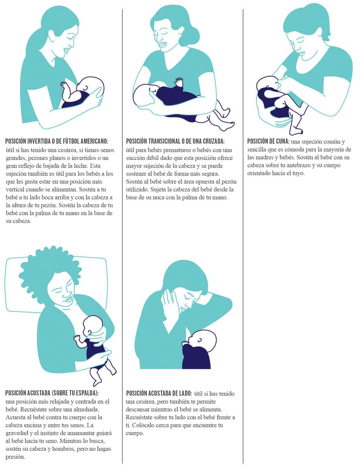 Ilustraciones de las posiciones de lactancia materna descritas anteriormente.